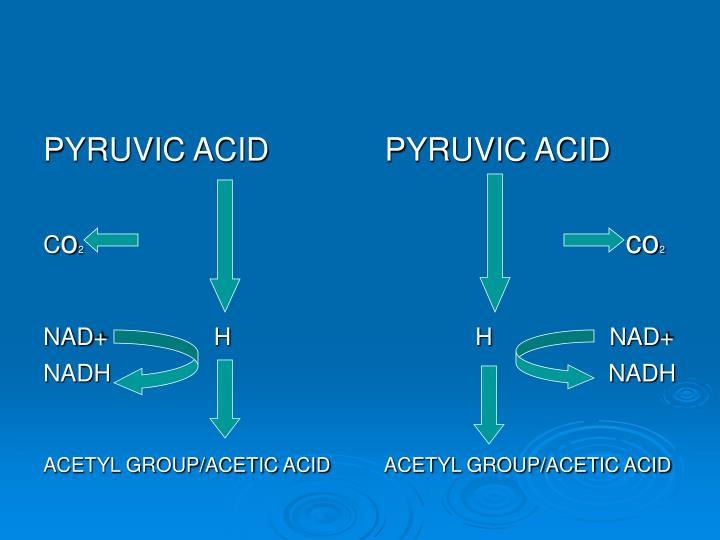 PYRUVIC ACID             PYRUVIC ACID