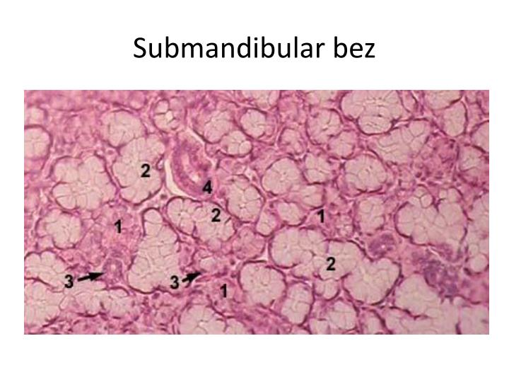 Submandibular bez