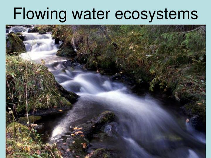 Flowing water ecosystems