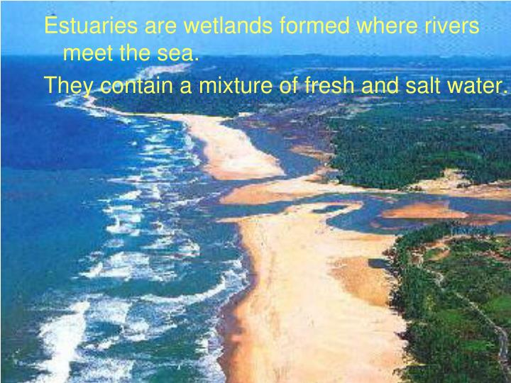 Estuaries are wetlands formed where rivers meet the sea.