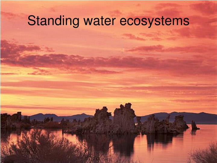 Standing water ecosystems