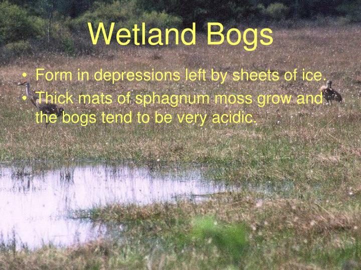 Wetland Bogs