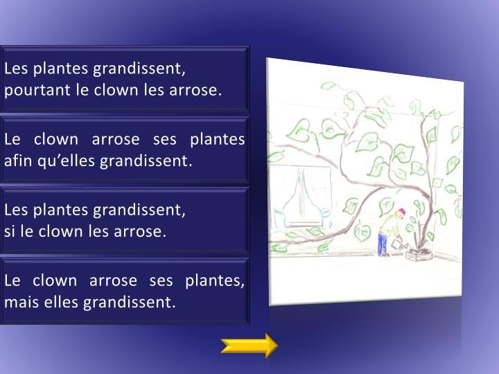 Les plantes grandissent
