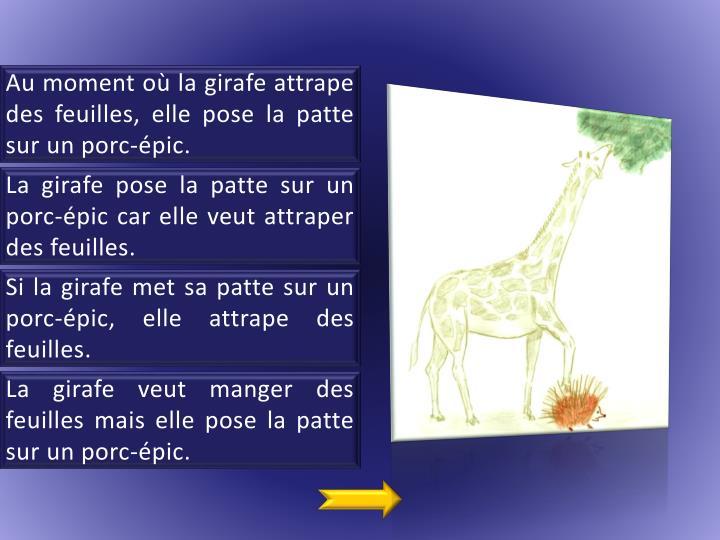 Au moment où la girafe attrape des feuilles, elle pose la patte sur un porc-épic.