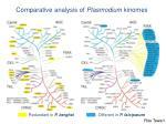 comparative analysis of plasmodium kinomes