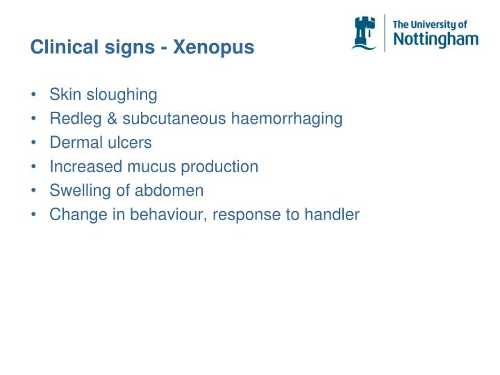 Clinical signs - Xenopus