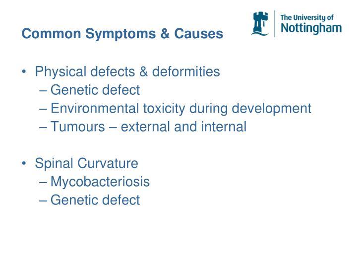 Common Symptoms & Causes