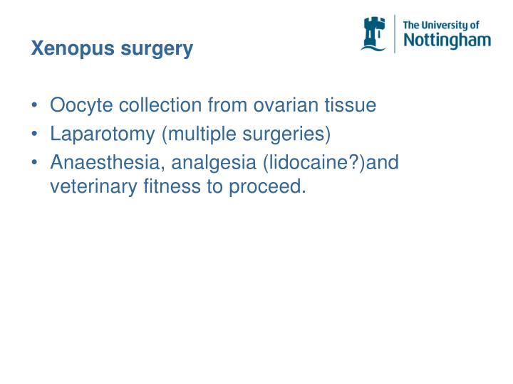 Xenopus surgery