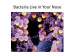 bacteria live in your nose