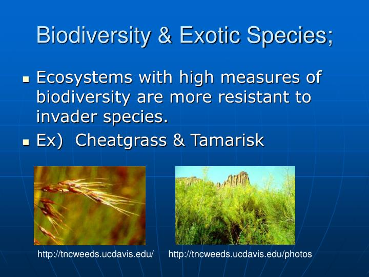 Biodiversity & Exotic Species;