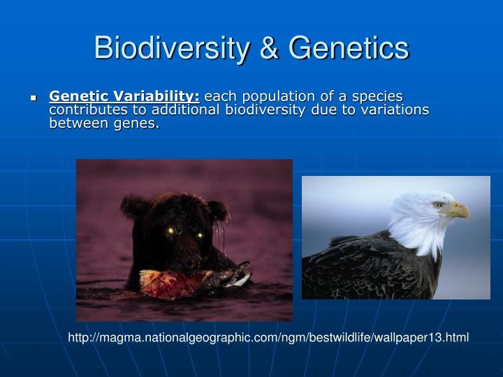Biodiversity & Genetics
