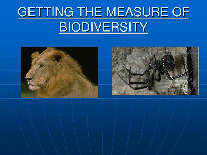 Getting the measure of biodiversity