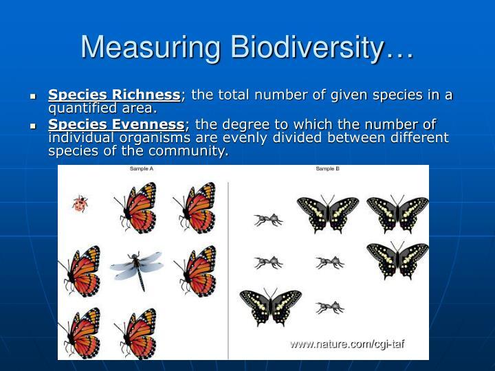 Measuring Biodiversity…