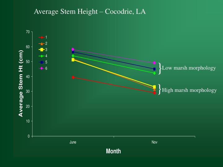 Average Stem Height – Cocodrie, LA