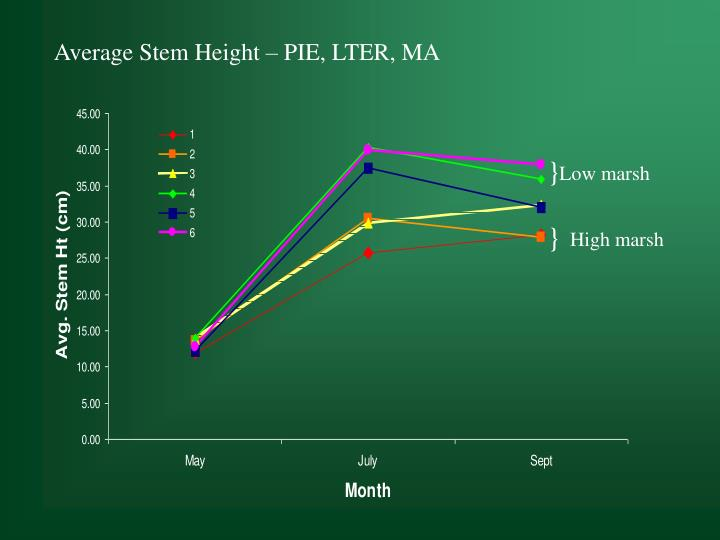 Average Stem Height – PIE, LTER, MA