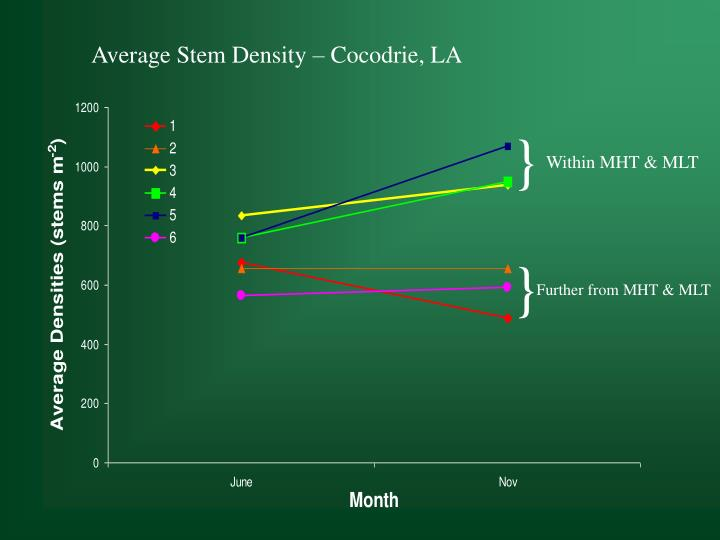 Average Stem Density – Cocodrie, LA