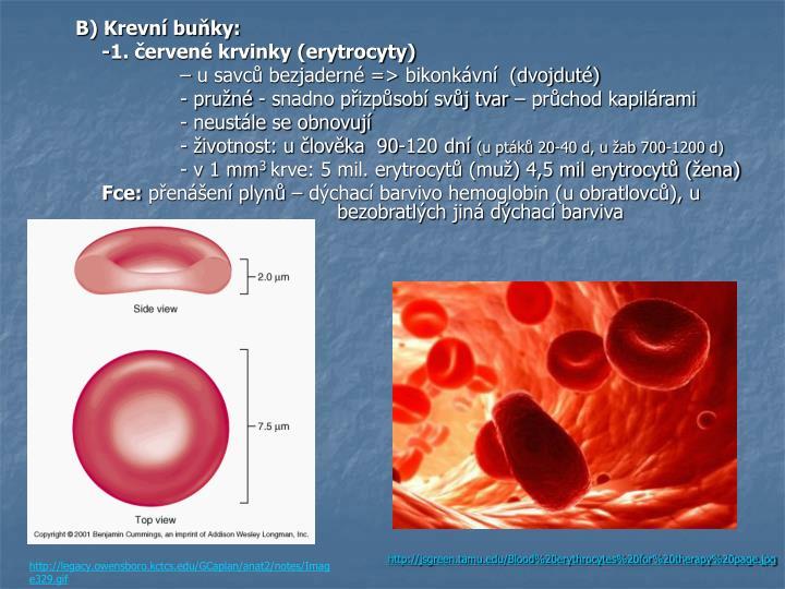 B) Krevní buňky: