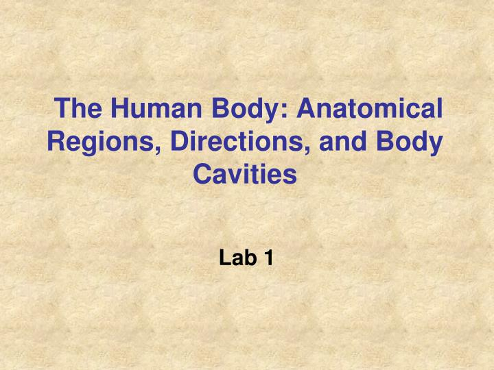 the human body anatomical regions directions and body cavities