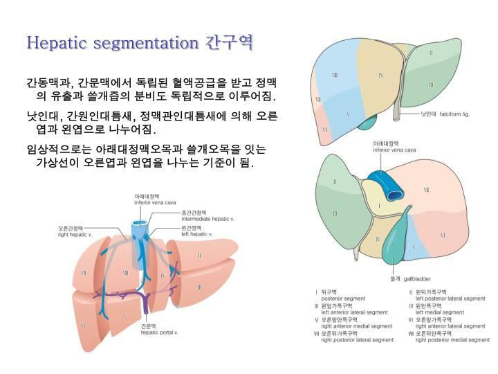 Hepatic segmentation