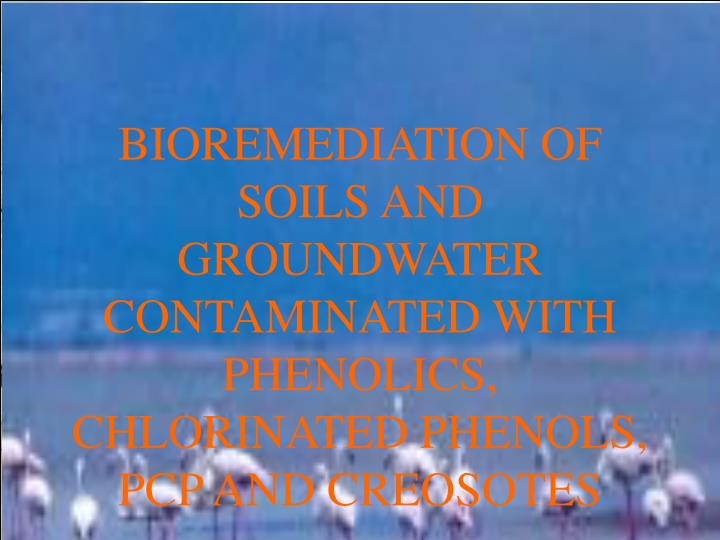 BIOREMEDIATION OF SOILS AND GROUNDWATER CONTAMINATED WITH PHENOLICS, CHLORINATED PHENOLS, PCP AND CR...