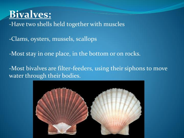 Bivalves: