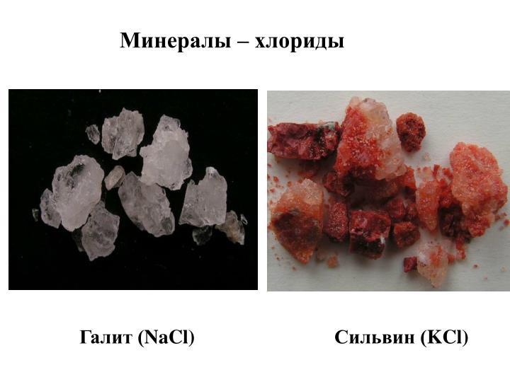 Минералы – хлориды