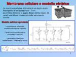 membrana cellulare e modello elettrico