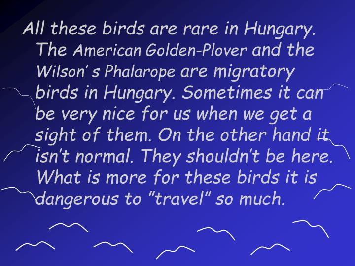 All these birds are rare in Hungary. The