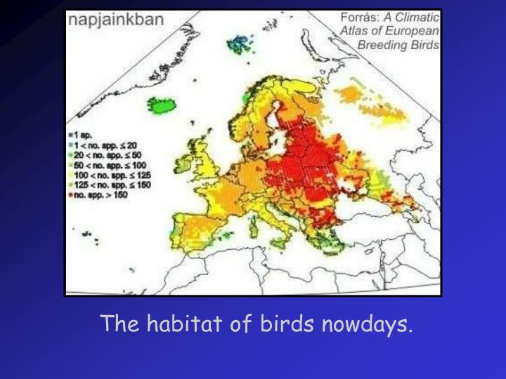 The habitat of birds nowdays.