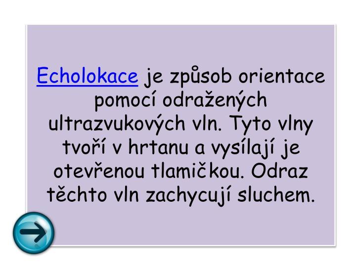 Echolokace