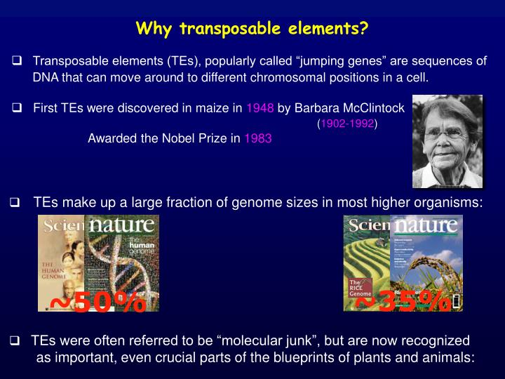 Why transposable elements?