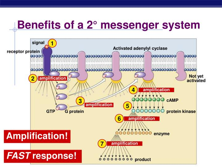 Benefits of a 2° messenger system