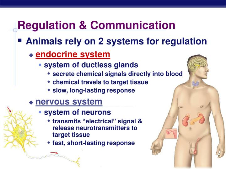 Regulation & Communication
