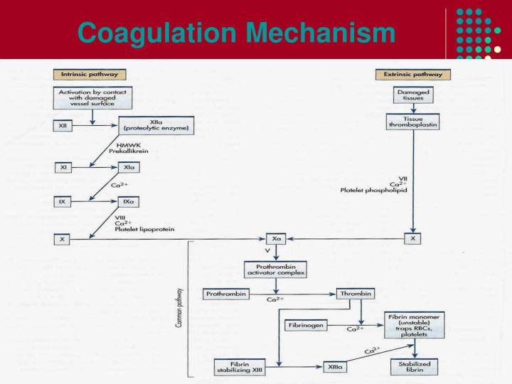 Coagulation Mechanism