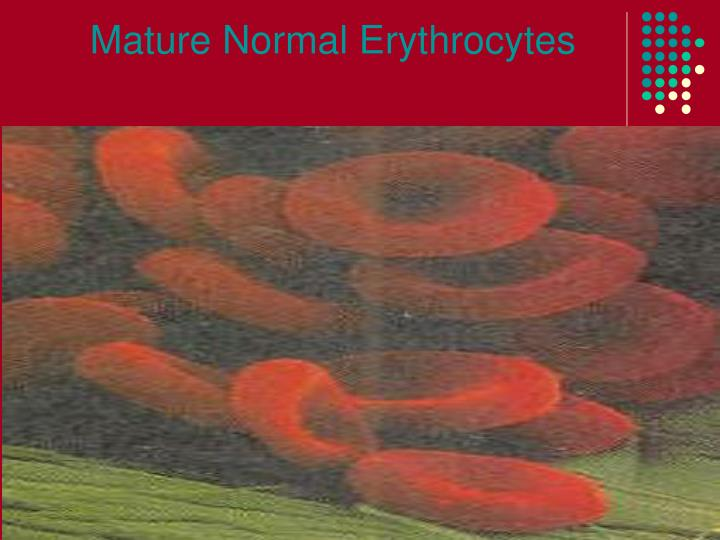 Mature normal erythrocytes