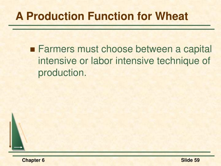 A Production Function for Wheat