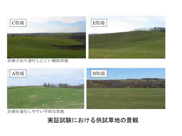 実証試験における供試草地の景観