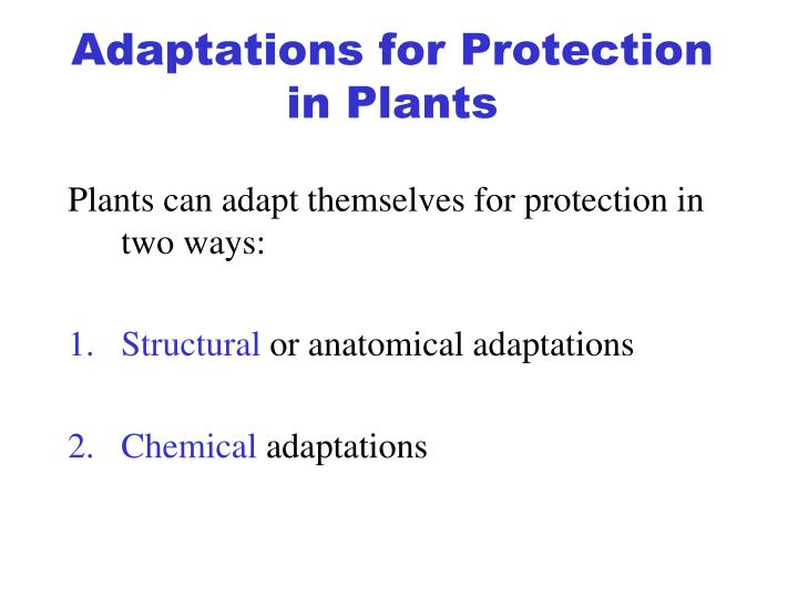 Adaptations for Protection in Plants