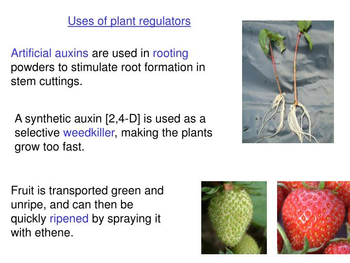 Uses of plant regulators