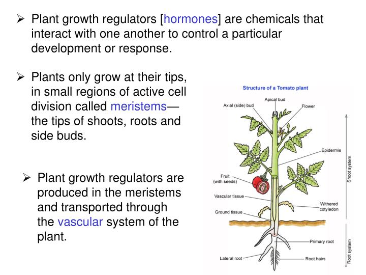 Plant growth regulators [