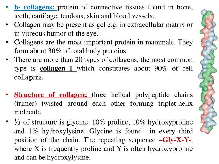 B- collagens:
