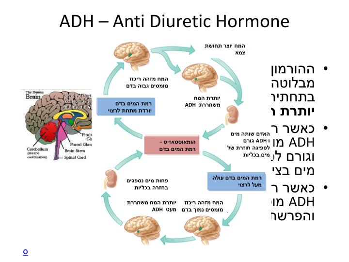 ADH – Anti Diuretic Hormone