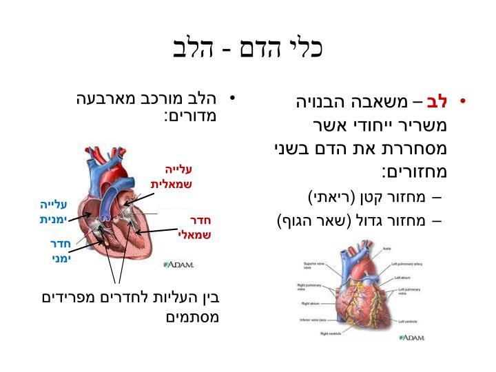 כלי הדם - הלב