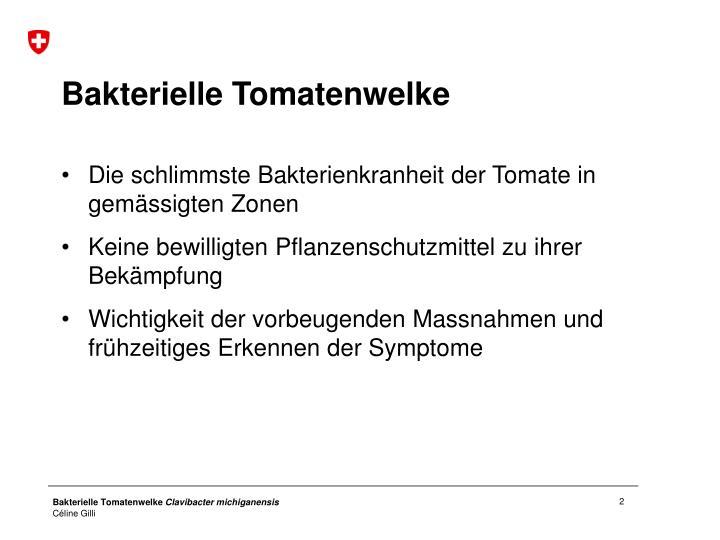 Bakterielle Tomatenwelke