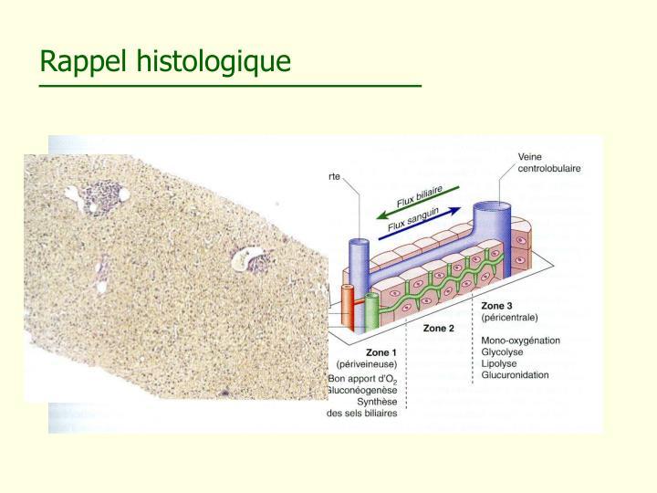 Rappel histologique