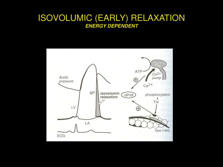 Isovolumic early relaxation energy dependent