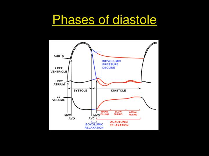 Phases of diastole