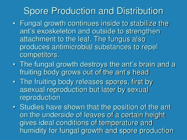 Spore Production and Distribution