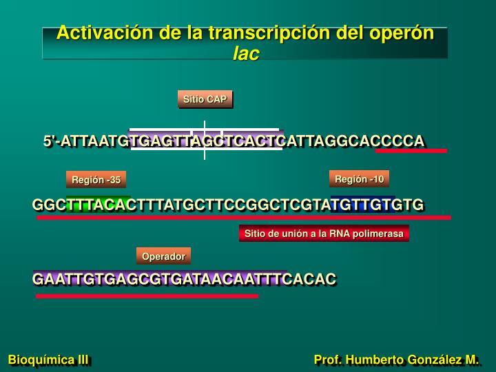 Activación de la transcripción del operón
