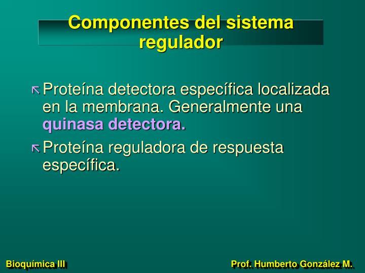 Componentes del sistema regulador
